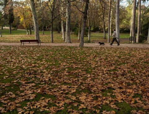 Visitas guiadas en otoño al Retiro